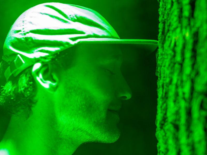 groene licht boom